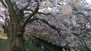 西船橋駅前整体院・カイロプラクティック・加圧トレーニング・201503桜08