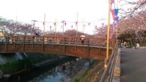 西船橋駅前整体院・カイロプラクティック・加圧トレーニング・201503桜07