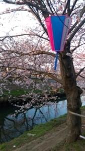 西船橋駅前整体院・カイロプラクティック・加圧トレーニング・201503桜01